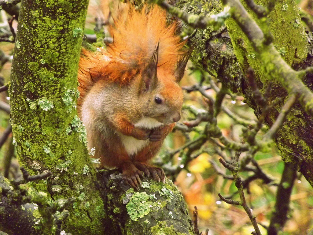 A red-haired visitor