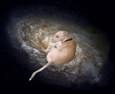 Space doggo by steelguy12