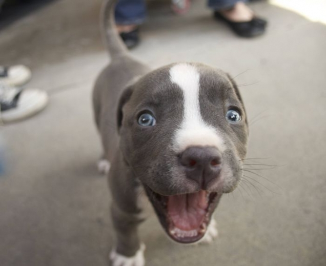 Excited-little-puppy by woohooligan