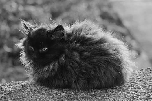 Grumpy Fluff