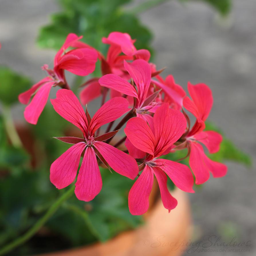 Deep pink flowers by sweepingshadows on deviantart deep pink flowers by sweepingshadows mightylinksfo