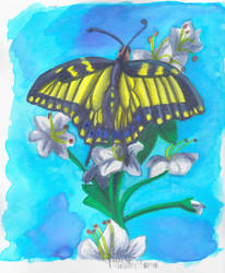 Swallowtail Butterfly by JenJentastique