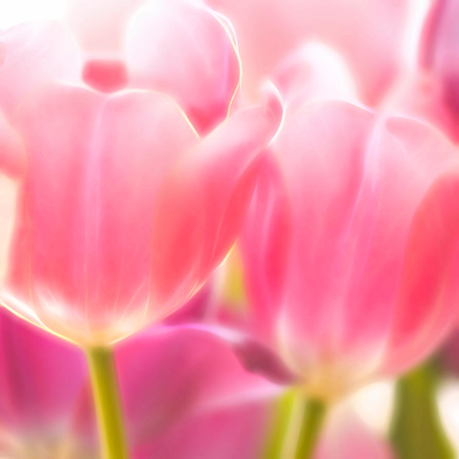 Tulips Glow by ChiaraLily9