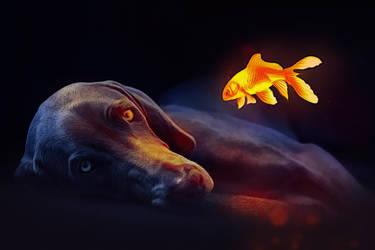 Goldfish Glows