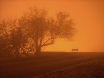 Fog by micecat