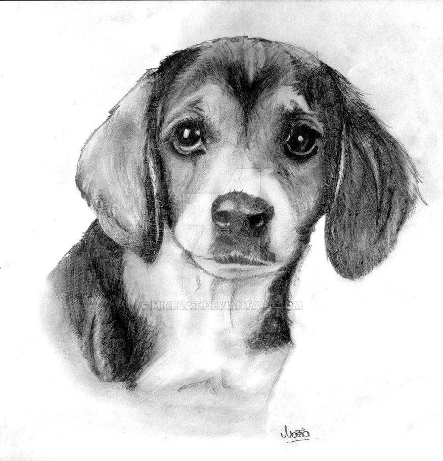 little beagle by micecat