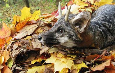 Autumn Fox Toki 2 by WolfRoad