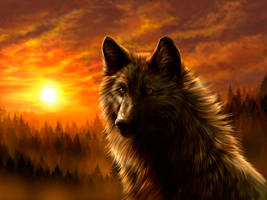 Black wolf by WolfRoad