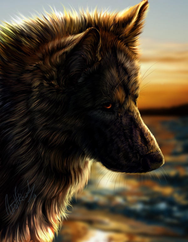 Remo the German shepherd by WolfRoad