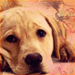 avatar170 by BlairLena