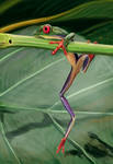 Speed paint - Frog by Obey-art