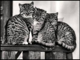 Cats by dwukolorowo