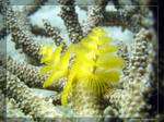 Ocean Bloom by Legioner