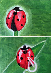 Ladybugs by whatonearth
