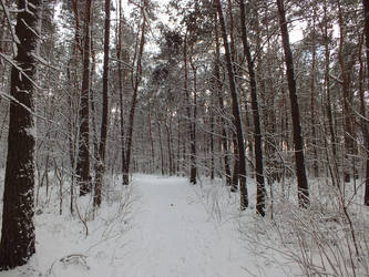 Winter forest by GureeNezumi