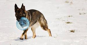 Frisbee!