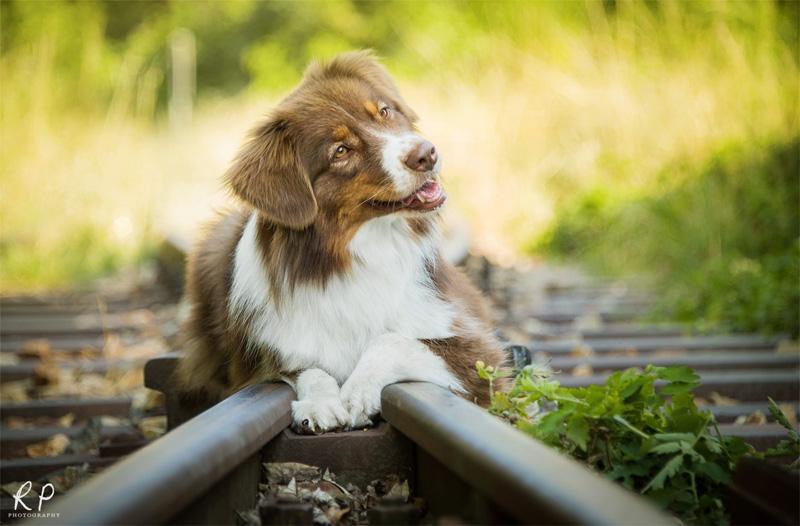 Rails by Wolfskuss