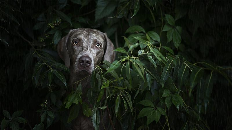 Rainforest by Wolfskuss
