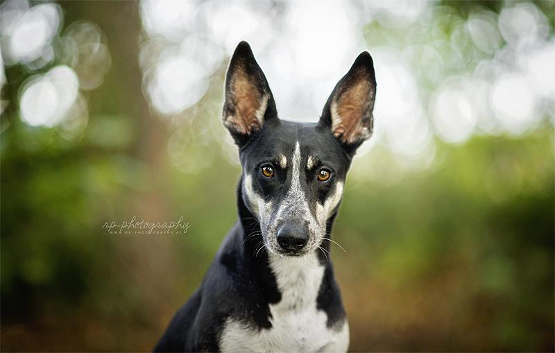 Big Ears by Wolfskuss