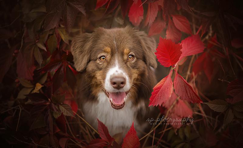 Finally Autumn by Wolfskuss