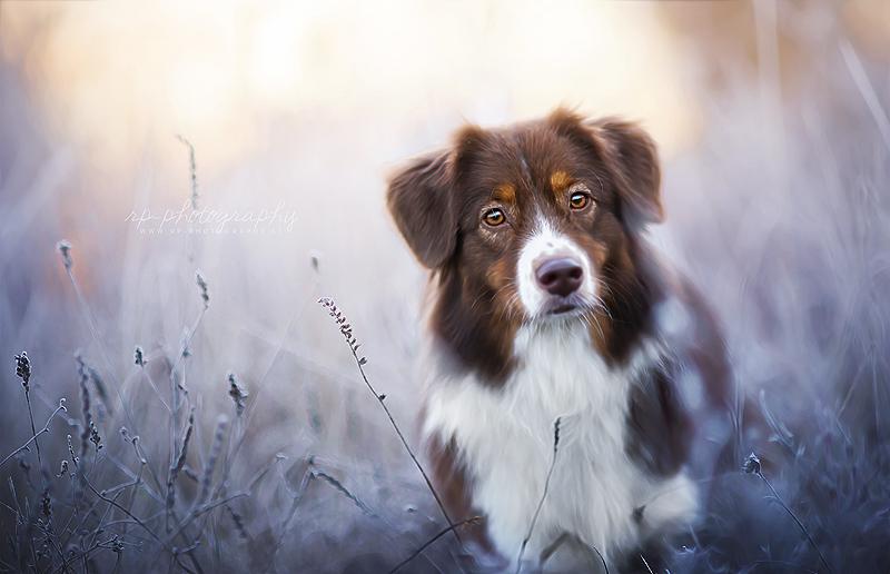 Frost by Wolfskuss