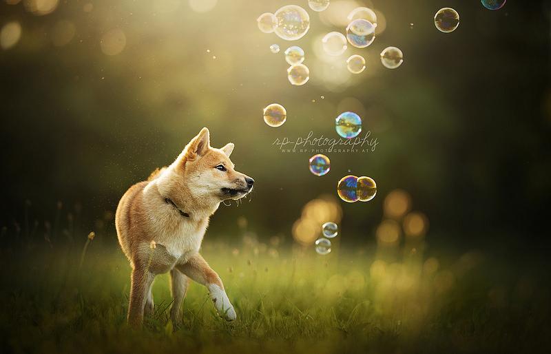 Bubbles by Wolfskuss