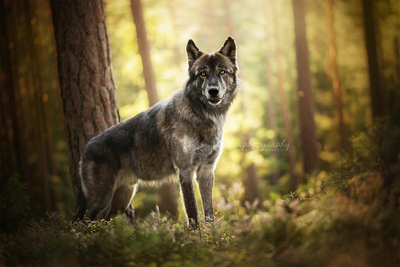 Peki by Wolfskuss