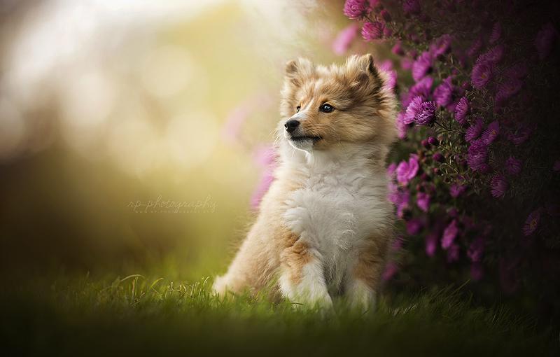 Finley by Wolfskuss