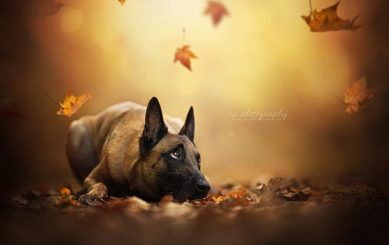 Rain of Leaves by Wolfskuss