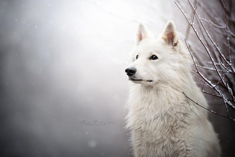 White Beauty by Wolfskuss