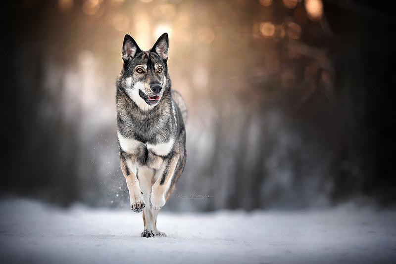 Skadi by Wolfskuss