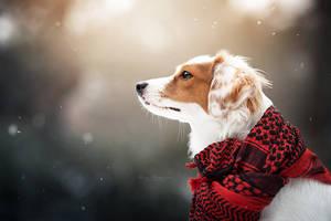 Winter Day by Wolfskuss