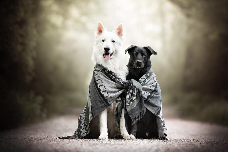 Best Friends by Wolfskuss