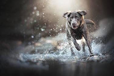Labrador Power