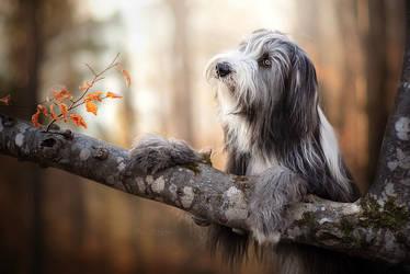 Autumn portrait by Wolfskuss