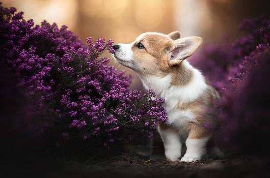 Smelling Spring