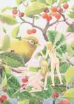 Fairy-cherry