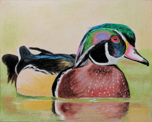 Duck oil pastel practice by YueZeng-MN