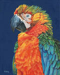 Macaw-oil on canvas