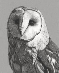 Ink Drawing - Barn Owl by PeachtreeDandan