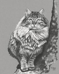 Ink Drawing - Cat in the tree by PeachtreeDandan