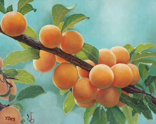 Oil Painting-Apricots by YueZeng-MN