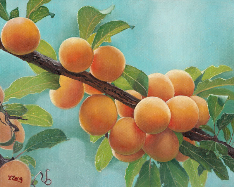 Oil Painting-Apricots by PeachtreeDandan