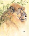 Gouache painting - Lion