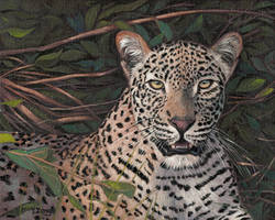 Oil painting - leopard