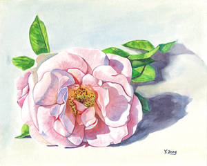 Gouache painting - Rose