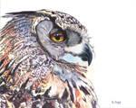 Gouache painting - Great Horned Owl portrait by PeachtreeDandan