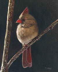 Oil Painting-Cardinal female