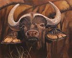Oil painting - African Buffalo