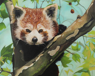 Oil painting - Red Panda by YueZeng-MN